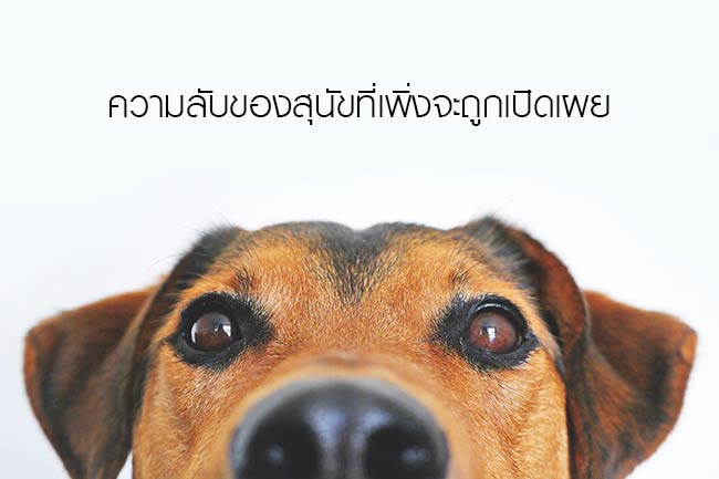 ความลับของสุนัขที่เพิ่งจะถูกเปิดเผย