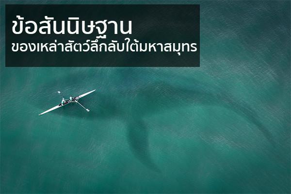 บอกเล่าปัจจัยที่ทำให้เกิดข้อสันนิษฐานของเหล่าสัตว์ลึกลับใต้มหาสมุทร
