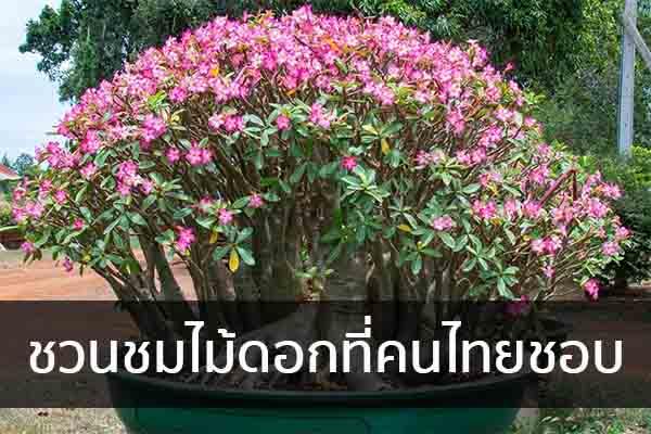 ชวนชมไม้ดอกที่คนไทยชอบ