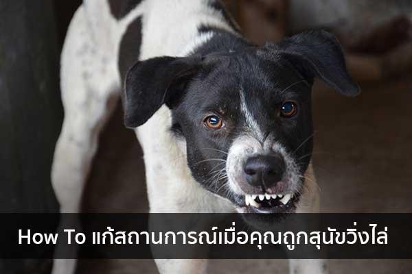 How To แก้สถานการณ์เมื่อคุณถูกสุนัขวิ่งไล่