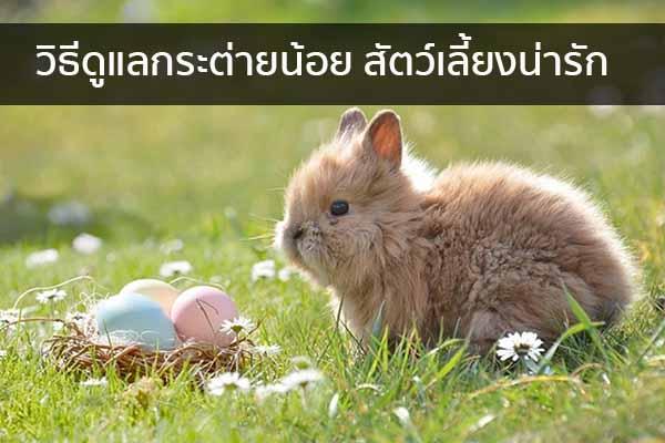 วิธีดูแลกระต่ายน้อย สัตว์เลี้ยงน่ารัก