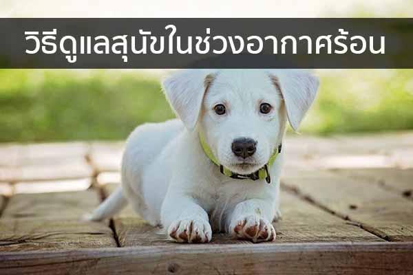 วิธีดูแลสุนัขในช่วงอากาศร้อน